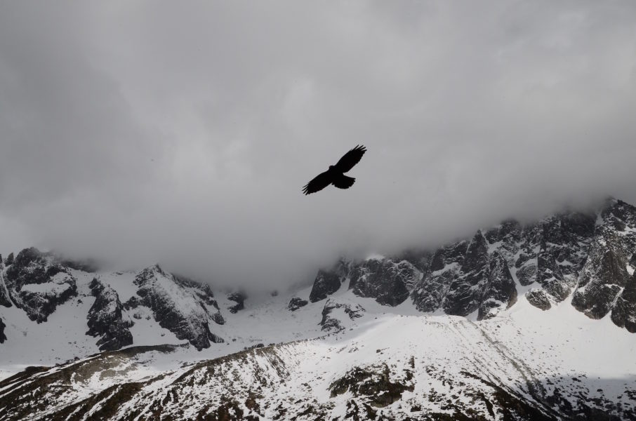eagle-snow-black-and-white-mountains-nature