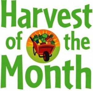 Harvest of the Month (February) - Organic Beets